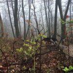 自然の熊と遭遇動画