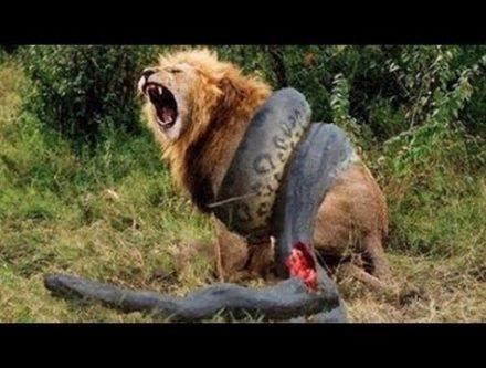 動物たちの戦いをカメラがとらえた動画