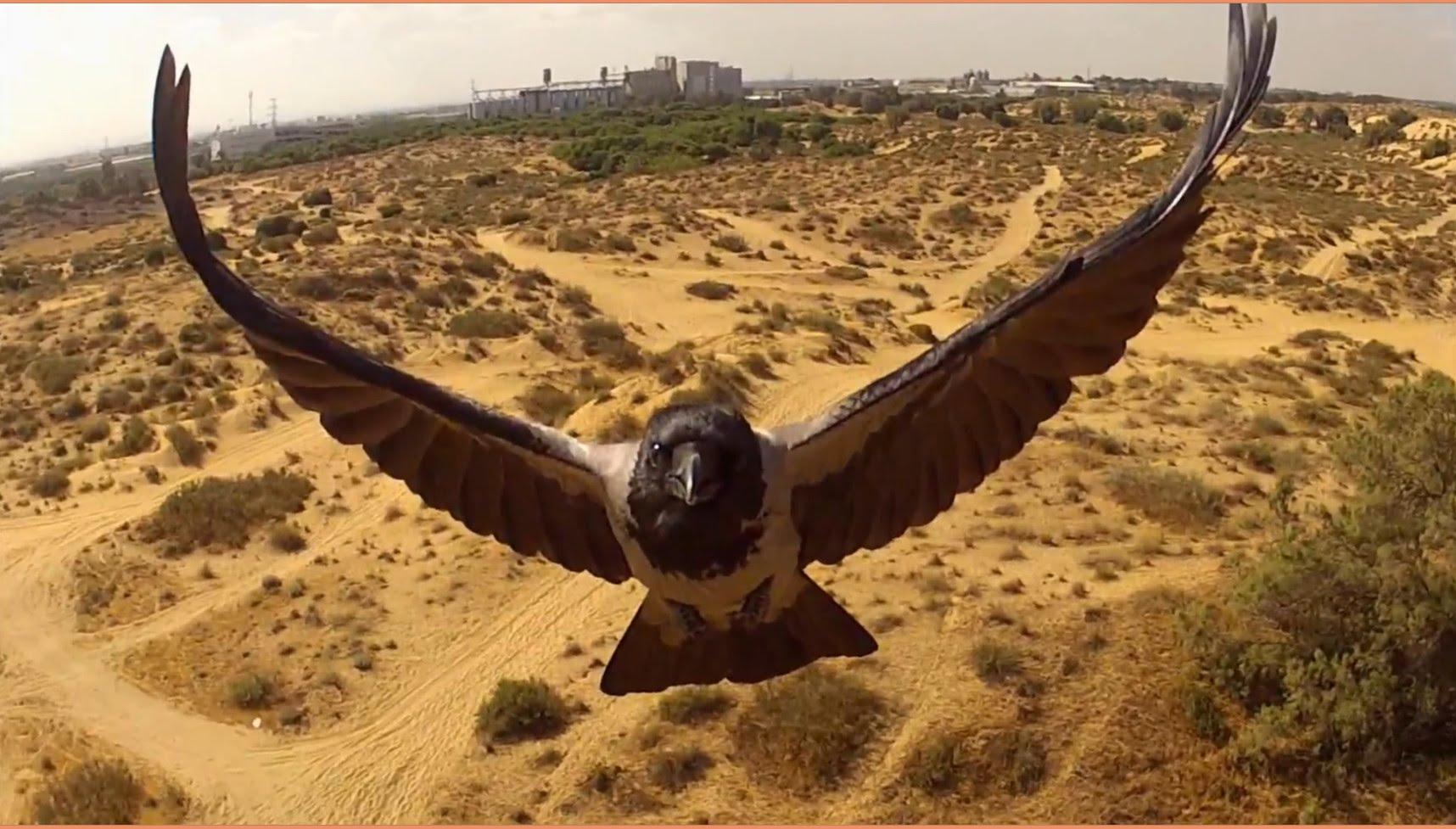 ドローンによる動物の新たな一面を記録した映像